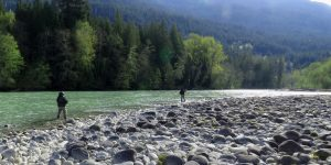 Pitt River / Lillooet River Fishing